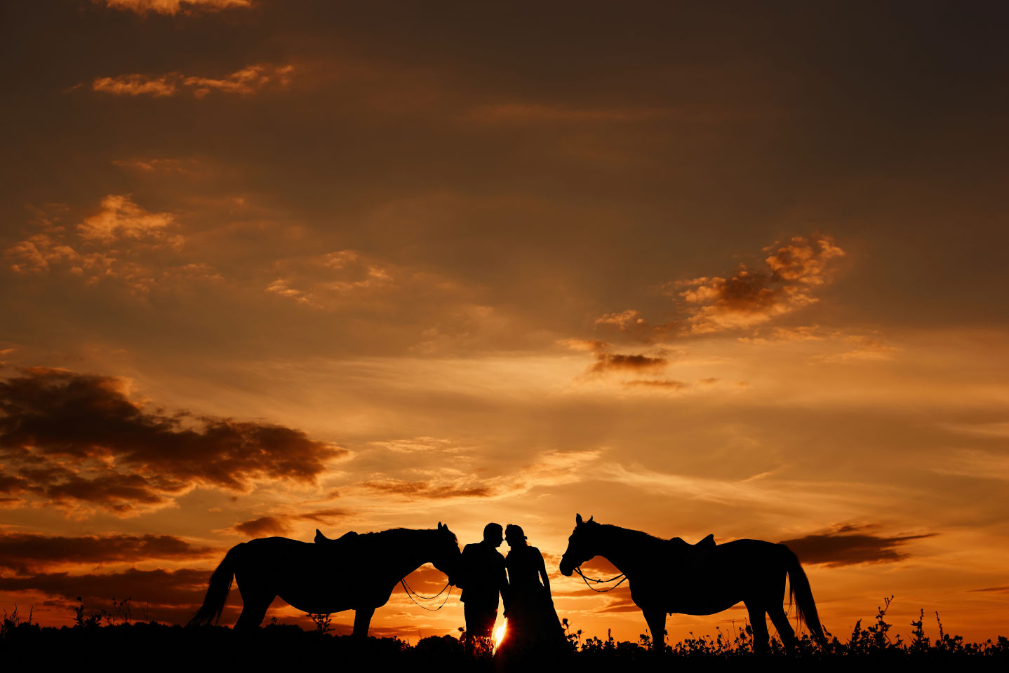 plener ślubny konie trójmiasto